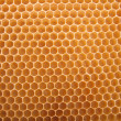 Honey texture - Stock Photo