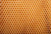 Honey texture — Stock Photo