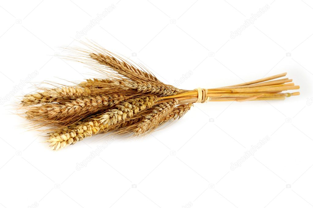 Isolated ear of wheat on white  Stock Photo #2435769