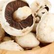 The champignons - detail — Stockfoto