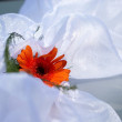 Stock Photo: Orange wedding flower on white satin