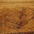 Stack of straw on field in the autumn — Stock Photo #2405804