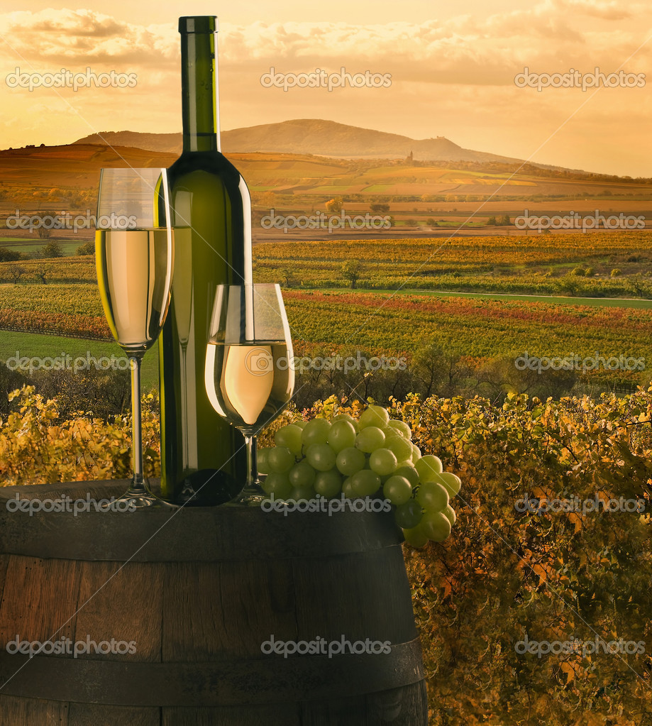 Still-life with white wine, cluster and barrel on background on vineyard — Stockfoto #2364730