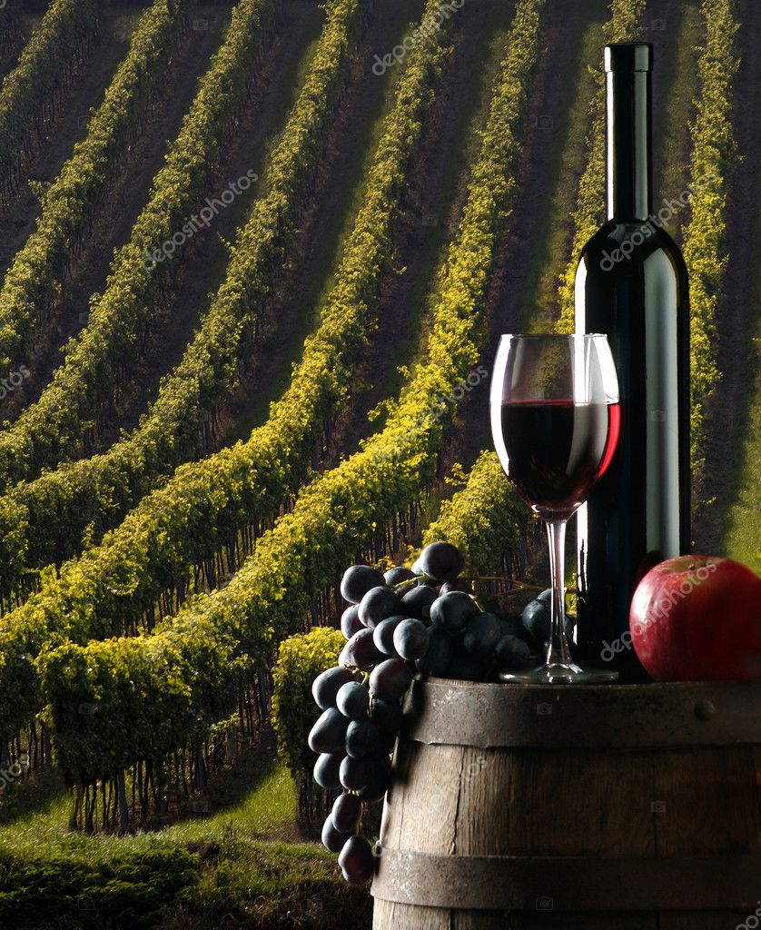 the red wine and vine with vineyard on background  — Stock Photo #2417924