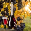 Red wine with vineyard - Stock Photo
