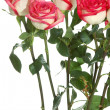 Long stem roses — Stock Photo