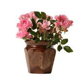 Küçük pembe güller — Stok fotoğraf
