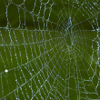 Spiderweb — Stock Photo #2555664