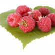 Raspberry — Stock Photo #2556699