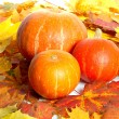 Pumpkins — Stock Photo #2557743