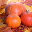 Pumpkins — Stock Photo #2557746