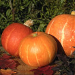 Pumpkins — Stock Photo #2558102