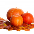 Pumpkins — Stock Photo #2558309