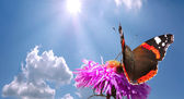 Butterfly on flower against sky — Stock Photo