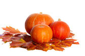 Pumpkins — Stock Photo