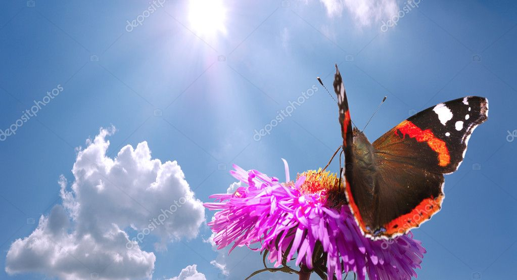 Butterfly on flower against blue cloudy sky with sun — Photo #2555045
