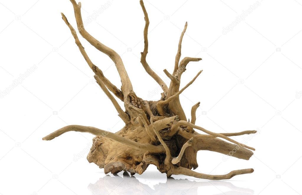 Dry old root isolated on white — Stock Photo #2563920