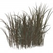 Dead Grass — Stock Photo
