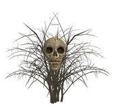 Skull In Bush — Stock Photo