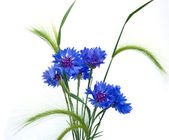 Cornflowers and ears — Stock Photo