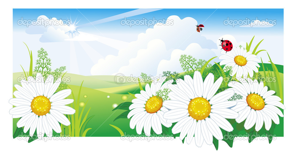 Summer landscape with a chamomile — Stock Vector #2377041