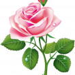 Beautiful pink rose — Stockvectorbeeld