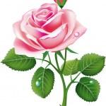 Beautiful pink rose — Stock Vector