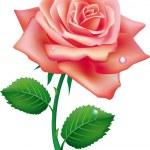 Illustration of single rose — Stock Vector