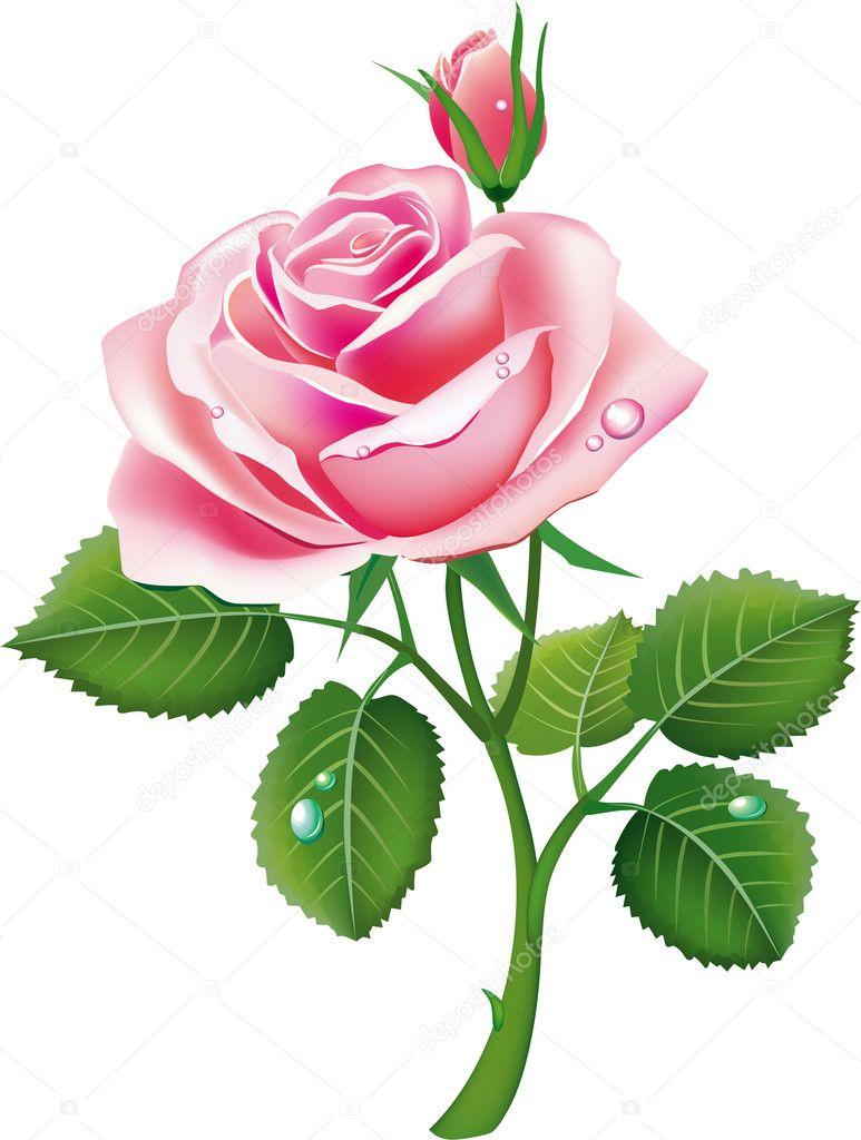 美丽的粉红色玫瑰– 图库插图