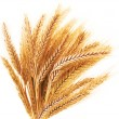 Wheat ears on a white background — Foto Stock