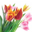 Spring Flowers Tulips — Stock Photo #2471857