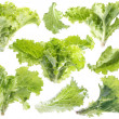 Leaf of green lettuce — Stock Photo #2472121