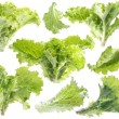 Leaf of green lettuce — Stock Photo