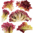Leaf of red lettuce — Stock Photo
