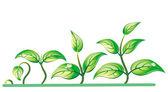Progresión del crecimiento de las plántulas — Vector de stock