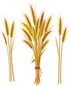 Buğday başak — Stok Vektör