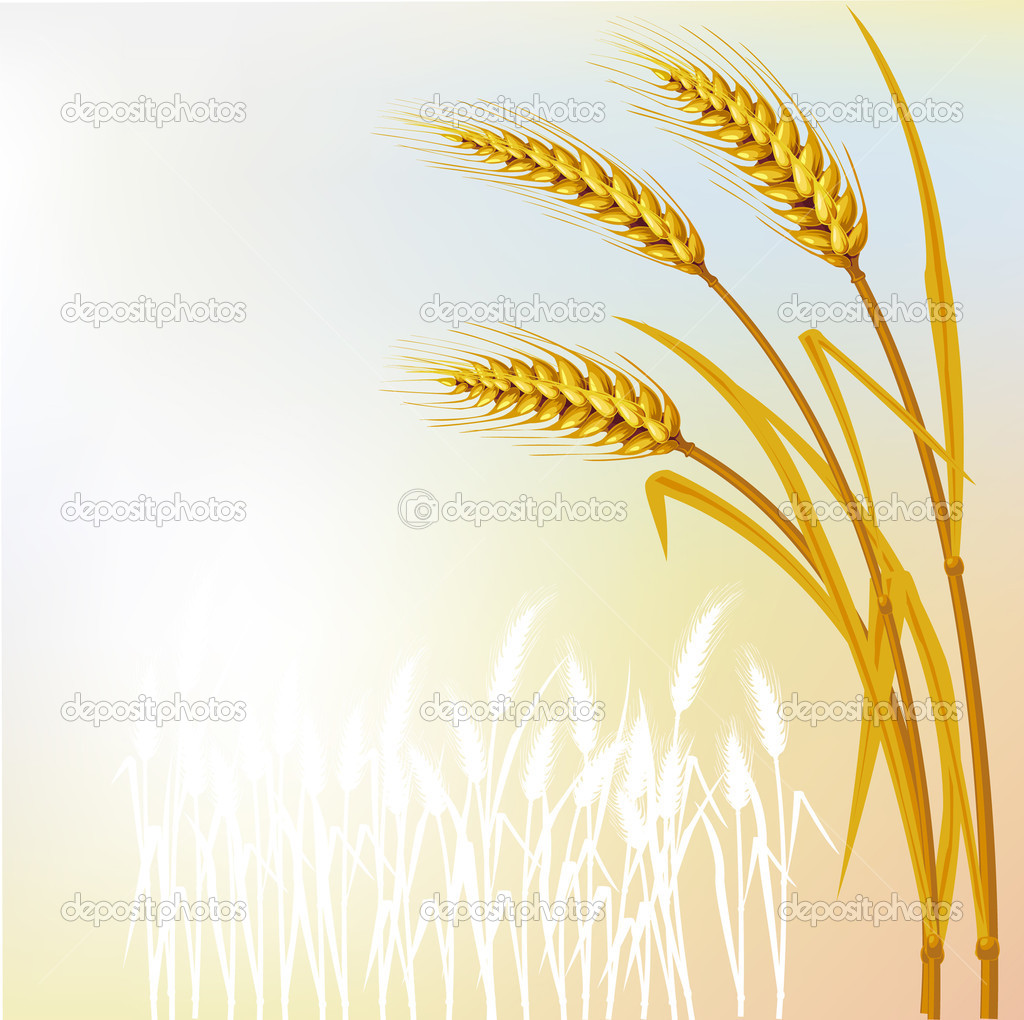 Background with wheat  Stock Vector #2495990