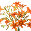 Bunch of orange Lilly — Stock Photo