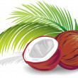 Stock Vector: Coconut