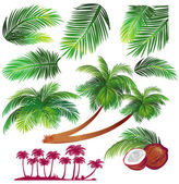 Tropical palms leaf — Stock Vector