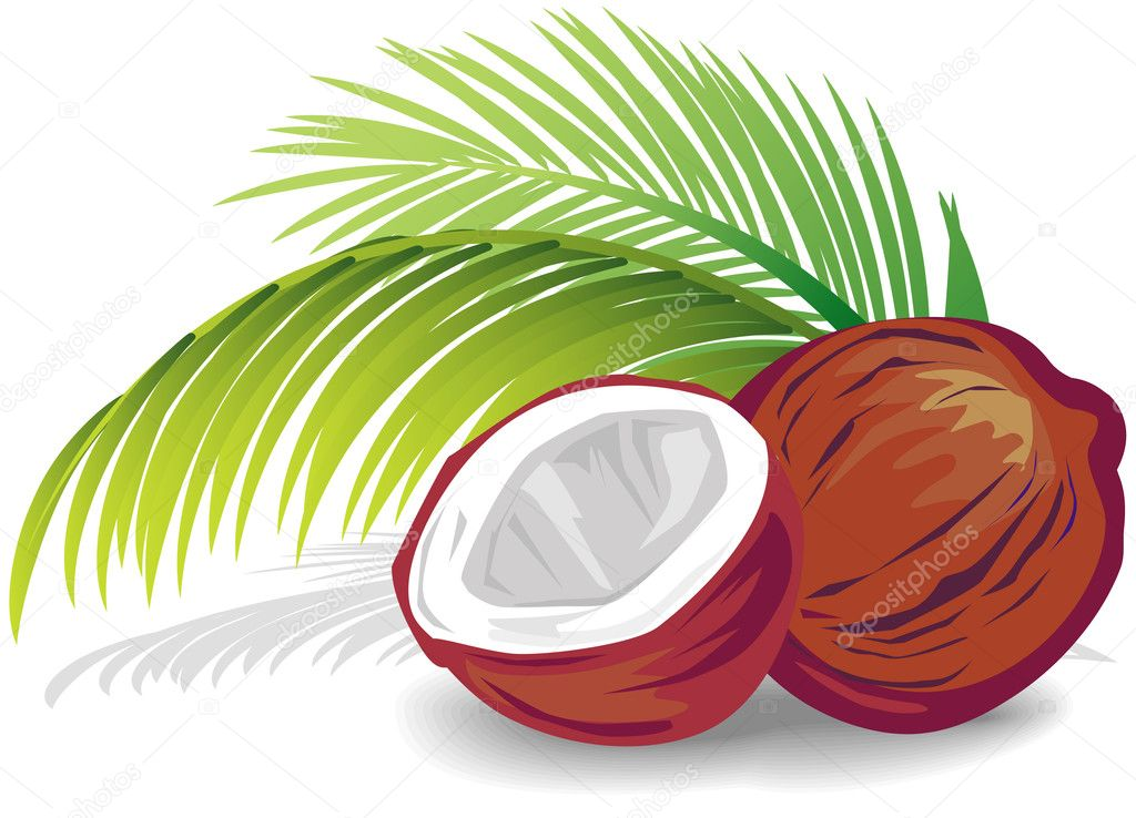 Coconut — Stock Vector #2501581