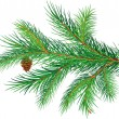 Vector de stock : Pine branch