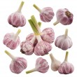 Garlic set — Stock Photo