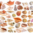 Stock Photo: Set of seashell collection