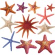 Set of painted sea star - Stock Photo
