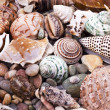 Stock Photo: Various seashells