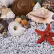 Stock Photo: Various shells and stone