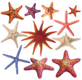 Set of painted sea star — Stock Photo