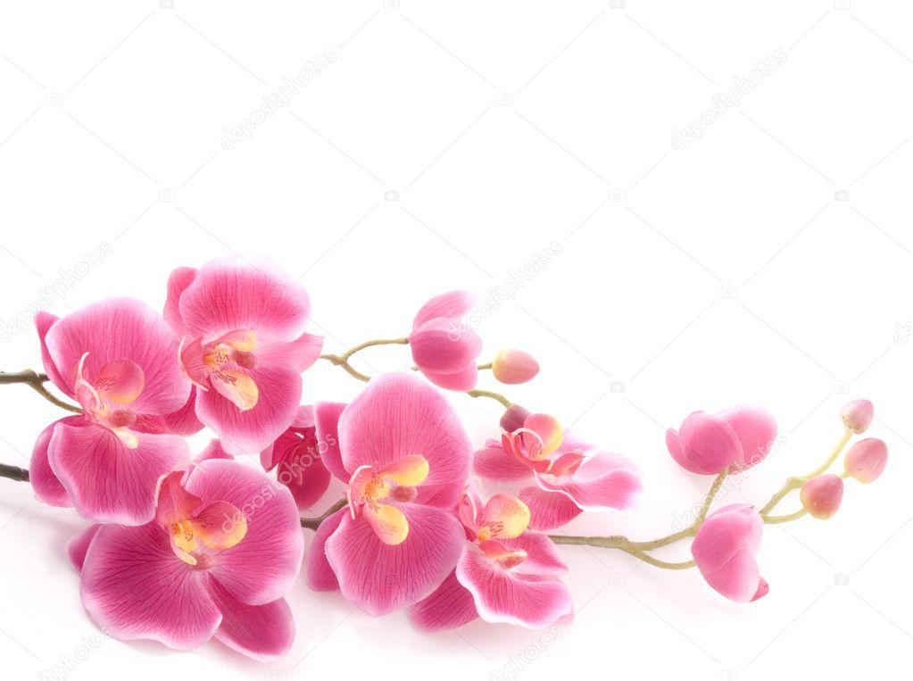Поздравление с цветами орхидея
