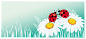 Two ladybirds on the chamomile — Vector de stock